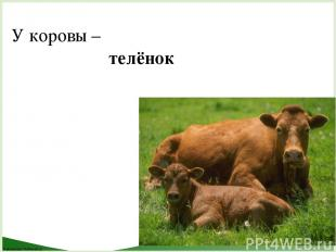 У коровы – телёнок FokinaLida.75@mail.ru