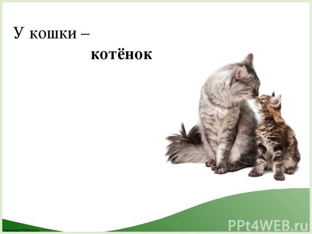У кошки – котёнок FokinaLida.75@mail.ru
