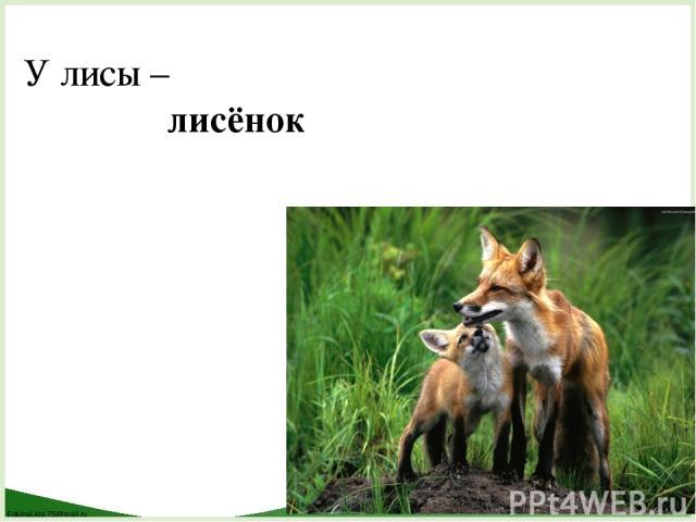 У лисы – лисёнок FokinaLida.75@mail.ru