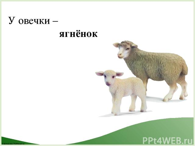 У овечки – ягнёнок FokinaLida.75@mail.ru