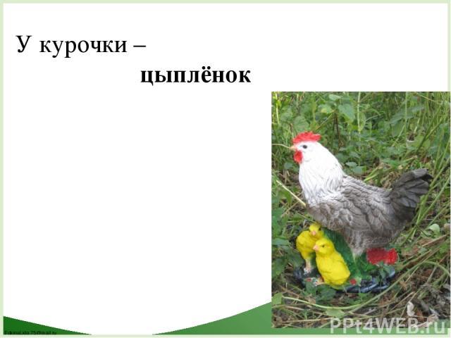 У курочки – цыплёнок FokinaLida.75@mail.ru