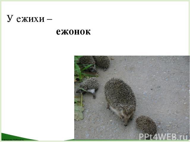 У ежихи – ежонок FokinaLida.75@mail.ru