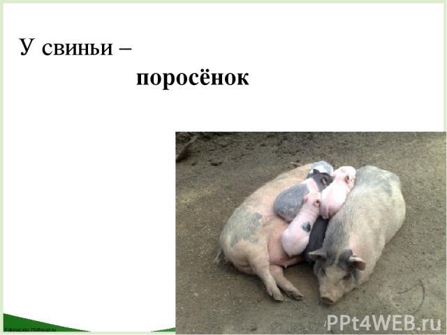 У свиньи – поросёнок FokinaLida.75@mail.ru