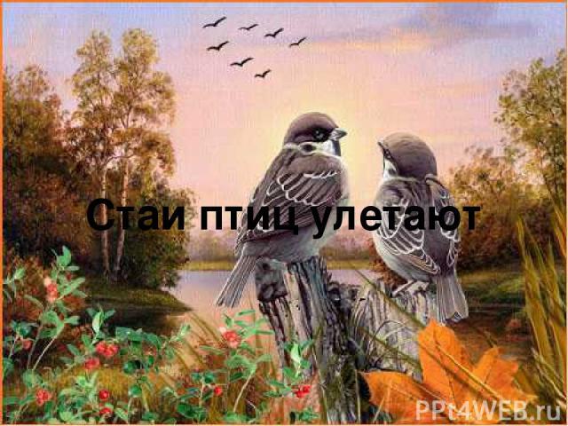 Стаи птиц улетают