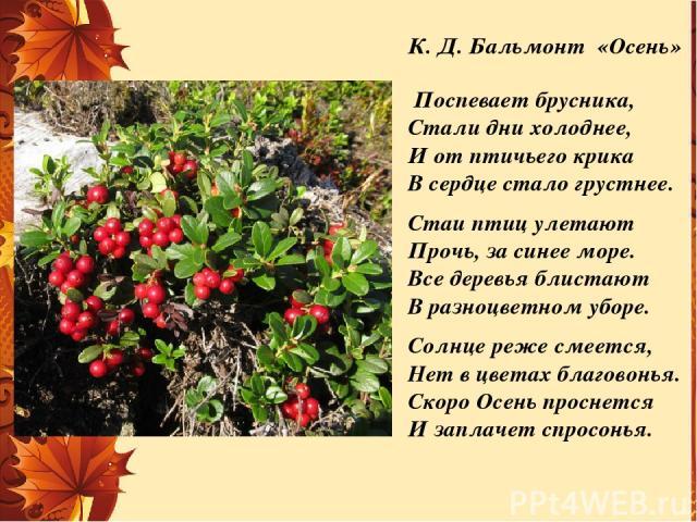 К. Д. Бальмонт «Осень» Поспевает брусника, Стали дни холоднее, И от птичьего крика В сердце стало грустнее. Стаи птиц улетают Прочь, за синее море. Все деревья блистают В разноцветном уборе. Солнце реже смеется, Нет в цветах благовонья. Скоро Осень …