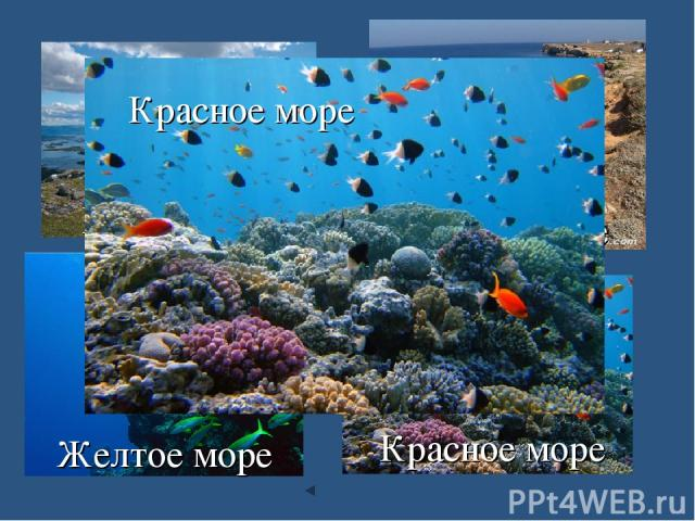 Белое море Черное море Желтое море Красное море Красное море