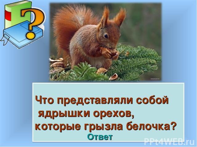 Что представляли собой ядрышки орехов, которые грызла белочка? Ответ