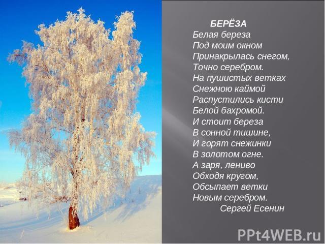 БЕРЁЗА Белая береза Под моим окном Принакрылась снегом, Точно серебром. На пушистых ветках Снежною каймой Распустились кисти Белой бахромой. И стоит береза В сонной тишине, И горят снежинки В золотом огне. А заря, лениво Обходя кругом, Обсыпает ветк…