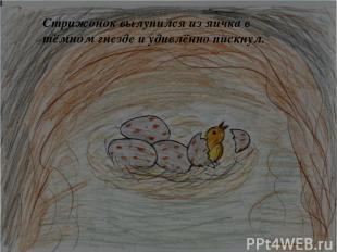 Стрижонок вылупился из яичка в тёмном гнезде и удивлённо пискнул.
