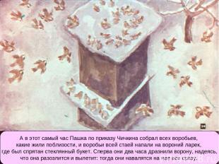 А в этот самый час Пашка по приказу Чичкина собрал всех воробьев, какие жили поб