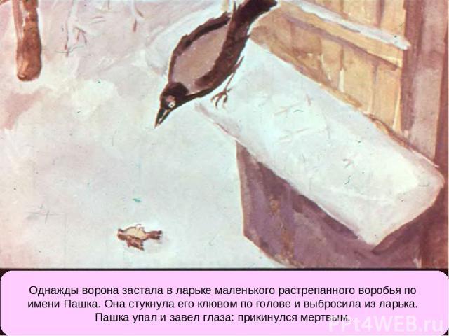 Однажды ворона застала в ларьке маленького растрепанного воробья по имени Пашка. Она стукнула его клювом по голове и выбросила из ларька. Пашка упал и завел глаза: прикинулся мертвым.