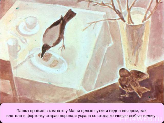Пашка прожил в комнате у Маши целые сутки и видел вечером, как влетела в форточку старая ворона и украла со стола копченую рыбью голову.