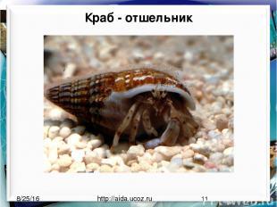 Краб - отшельник http://aida.ucoz.ru