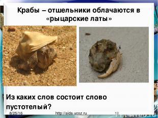 Крабы – отшельники облачаются в «рыцарские латы» http://aida.ucoz.ru Из каких сл
