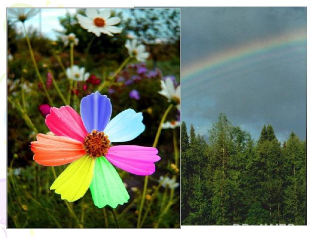Вышел человек в сад. И встретили его, как и вчера, и позавчера, и раньше красные розы, оранжевые ноготки,желтые золотые шары, зеленая трава, голубые незабудки, синие колокольчики, фиолетовые тюльпаны. Цветы радостно повернулись к человеку.