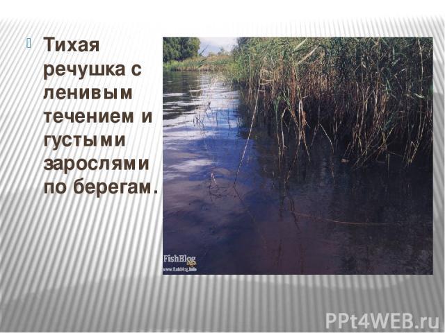 Тихая речушка с ленивым течением и густыми зарослями по берегам. Тихая речушка с ленивым течением и густыми зарослями по берегам.