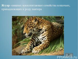 http://musafirova.ucoz.ru/Rebjata/Chitalnyj_zal/Foto/Charushin.jpg портрет Чаруш