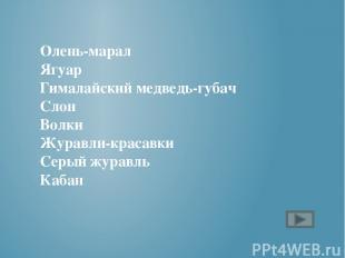 Чарушин «Кабан»