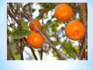 Что ты знаешьо Померанце? Померанцэто апельсин, т.е. ее имя символизирует чи