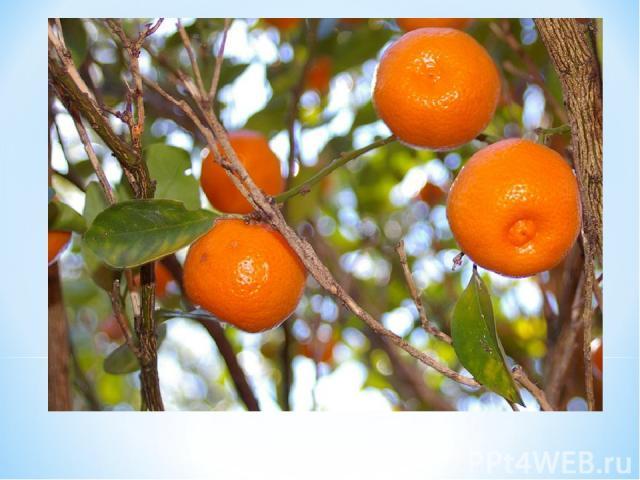 Что ты знаешьо Померанце? Померанцэто апельсин, т.е. ее имя символизирует чистоту, т.к. флер д/оранж (апельсин,померанц) является символом женской чистоты.