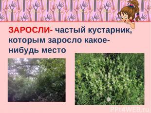 ЗАРОСЛИ- частый кустарник, которым заросло какое-нибудь место