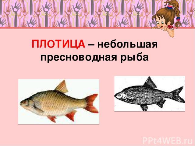 ПЛОТИЦА – небольшая пресноводная рыба