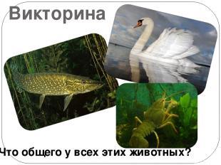 Викторина Что общего у всех этих животных?
