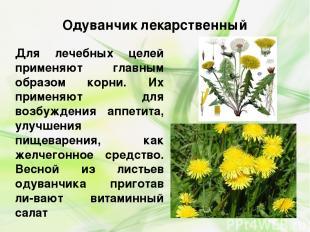 Одуванчик лекарственный Для лечебных целей применяют главным образом корни. Их п