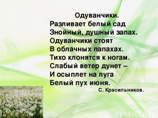 Одуванчики. Разливает белый сад Знойный, душный запах. Одуванчики стоят В облачн