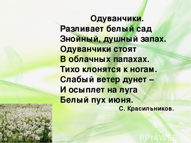 Одуванчики. Разливает белый сад Знойный, душный запах. Одуванчики стоят В облачных папахах. Тихо клонятся к ногам. Слабый ветер дунет – И осыплет на луга Белый пух июня. С. Красильников.