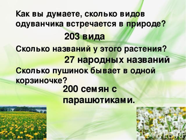 Как вы думаете, сколько видов одуванчика встречается в природе? Сколько названий у этого растения? 203 вида 27 народных названий Сколько пушинок бывает в одной корзиночке? 200 семян с парашютиками.