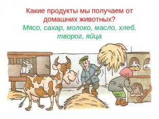 Какие продукты мы получаем от домашних животных? Мясо, сахар, молоко, масло, хле