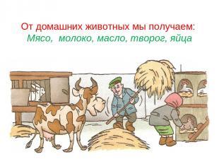 От домашних животных мы получаем: Мясо, молоко, масло, творог, яйца