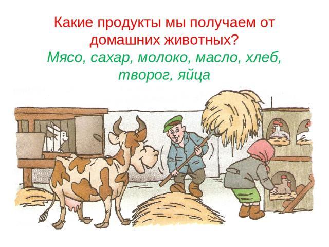 Какие продукты мы получаем от домашних животных? Мясо, сахар, молоко, масло, хлеб, творог, яйца