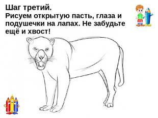 РЫСЬ Рысь — настоящая дикая северная кошка, которой не страшны сильные морозы. Р
