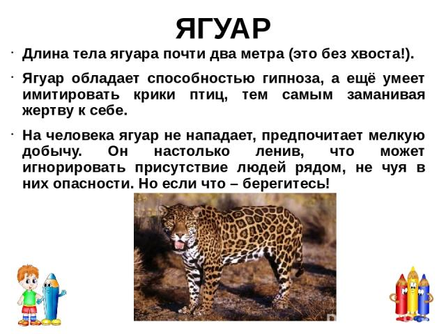 Гепард – самое быстро в мире наземное существо. Может разогнаться до 113 км всего за несколько секунд, но быстро устаёт. Гепарды это единственные большие коты которые не могут рычать. Они могут мурлыкать и как правило громко мурлыкают когда рядом на…