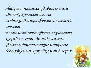 Нарцисс- нежный удивительный цветок, который имеет необыкновенную форму и сильны