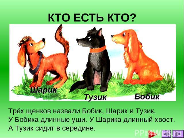 КТО ЕСТЬ КТО? Трёх щенков назвали Бобик, Шарик и Тузик. У Бобика длинные уши. У Шарика длинный хвост. А Тузик сидит в середине. Тузик Бобик Шарик