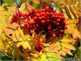 http://flamber.ru/files/photos/1190303225/1191256797_g.jpg http://sabanaeva.nvrs