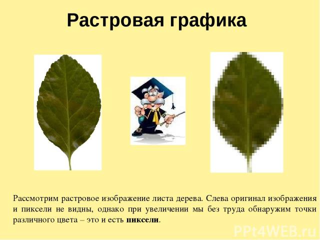 Растровая графика Рассмотрим растровое изображение листа дерева. Слева оригинал изображения и пиксели не видны, однако при увеличении мы без труда обнаружим точки различного цвета – это и есть пиксели.