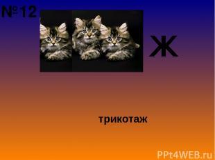 Ж трикотаж №12
