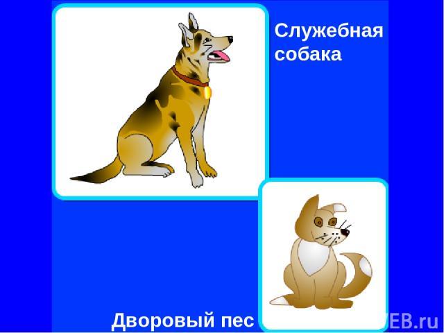Дворовый пес Служебная собака