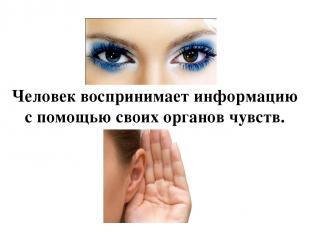 Человек воспринимает информацию с помощью своих органов чувств.