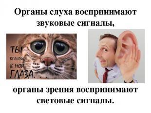 Органы слуха воспринимают звуковые сигналы, органы зрения воспринимают световые