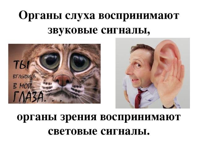 Органы слуха воспринимают звуковые сигналы, органы зрения воспринимают световые сигналы.