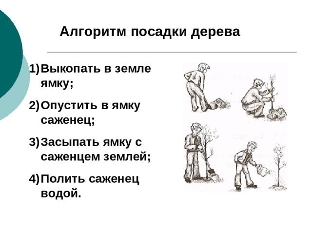 Алгоритм посадки дерева Выкопать в земле ямку; Опустить в ямку саженец; Засыпать ямку с саженцем землей; Полить саженец водой.