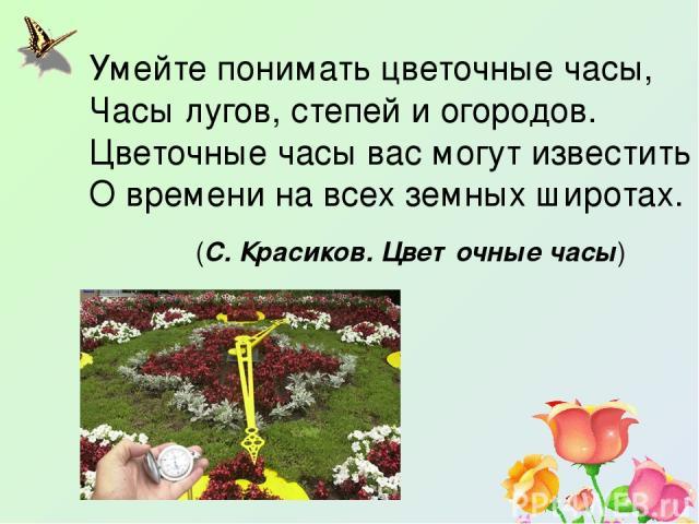 Умейте понимать цветочные часы, Часы лугов, степей и огородов. Цветочные часы вас могут известить О времени на всех земных широтах. (С. Красиков. Цветочные часы)