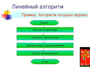 Линейный алгоритм Пример. Алгоритм посадки дерева