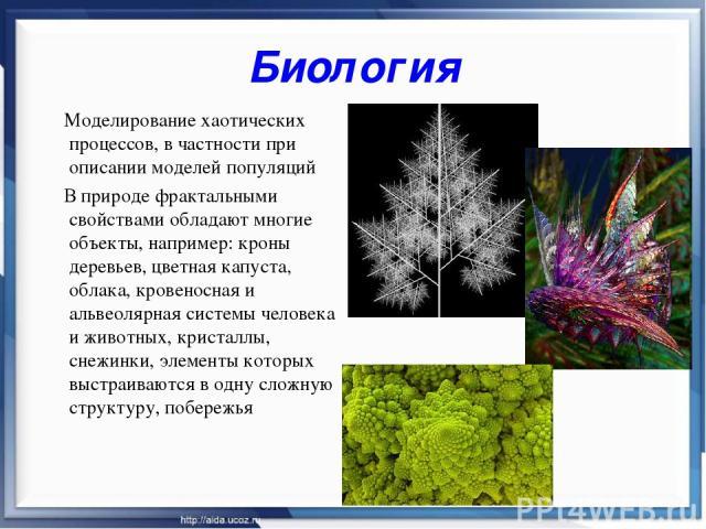 Биология Моделирование хаотических процессов, в частности при описании моделей популяций В природе фрактальными свойствами обладают многие объекты, например: кроны деревьев, цветная капуста, облака, кровеносная и альвеолярная системы человека и живо…