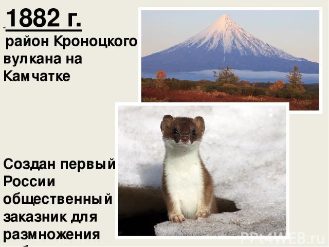 1882 г. район Кроноцкого вулкана на Камчатке Создан первый в России общественный заказник для размножения соболя.